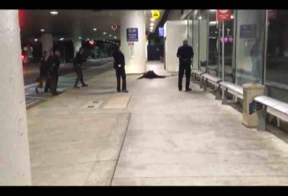No shots fired at Los Angeles airport, say Police