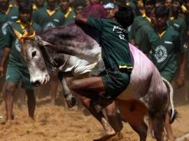 Jallikattu to be held across Tamil Nadu tomorrow, says CM after ordinance approval