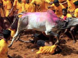 Jallikattu protest intensifies: Tamil Nadu to remain shut to protest ban on the festival