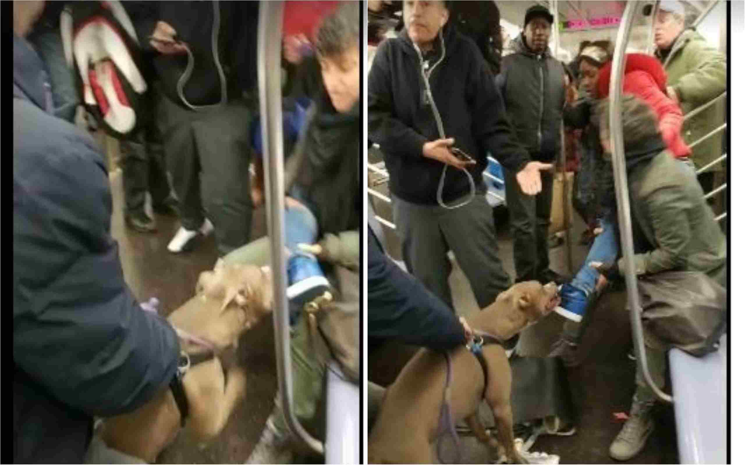 BIZARRE! This video of pit bull biting a woman and not letting go is going viral