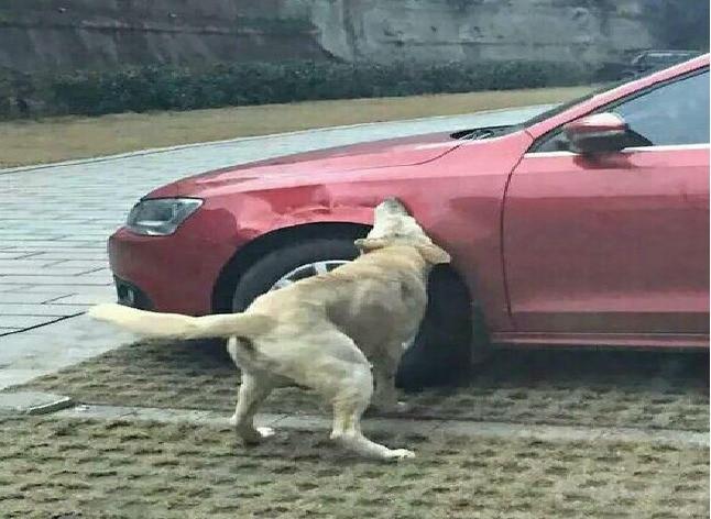 Several homeless dogs perform Avenge on car owner