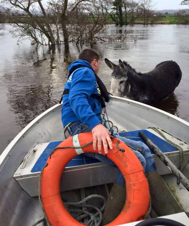 Donkey Smiles From Ear To Ear After Being Rescued From Flood In Ireland