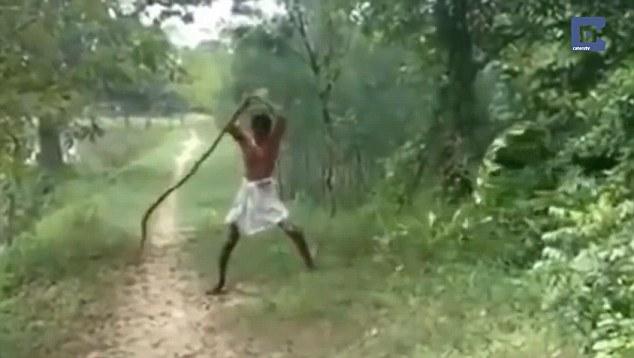 man kills Cobra in revenge