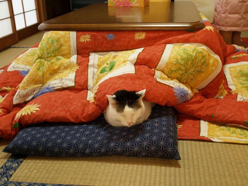 japan brings dining table cum bed