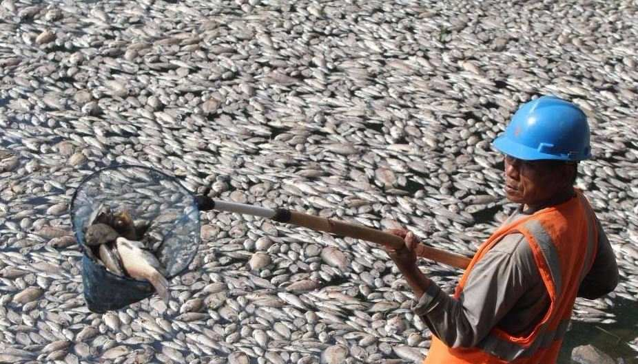 Thousands of dead fish washed up on Sunday to surface of a lake near Jakarta