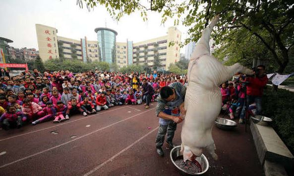 Pig butchering in school for tradition