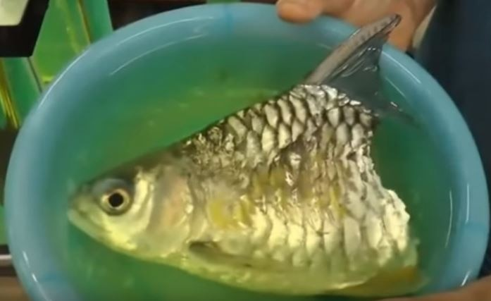fish survives for six months after losing half of its body