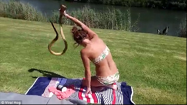 Bikini girl grabs an attacking cobra with her bare hands