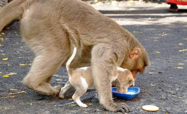 These photos of motherly love will touch your heart!