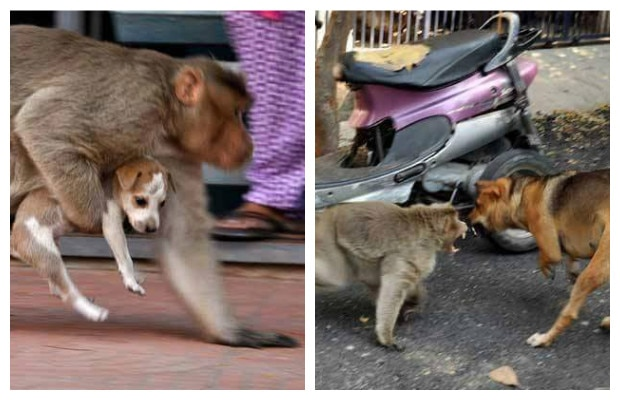 a lot to learn from the monkey-puppy love