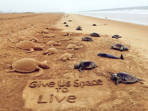 carcasses of over 150 Olive Ridley turtles and a bottlenose dolphin was up on an Odisha beach