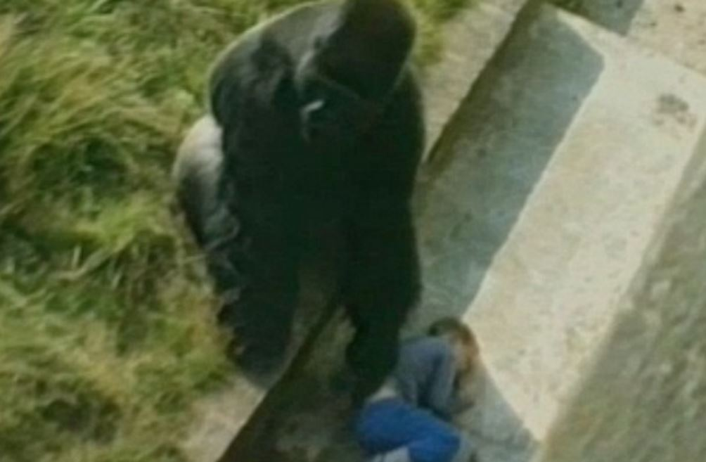 30 years passed since the giant gorilla had saved the boy's life