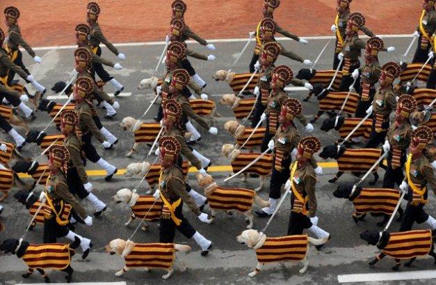 Dog squad for Republic Day parade