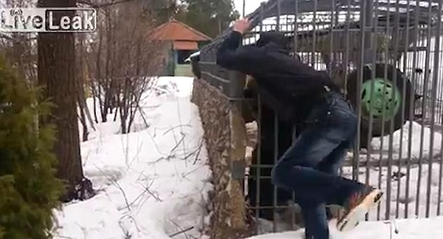 Russian man has his hand ripped off by a caged bear