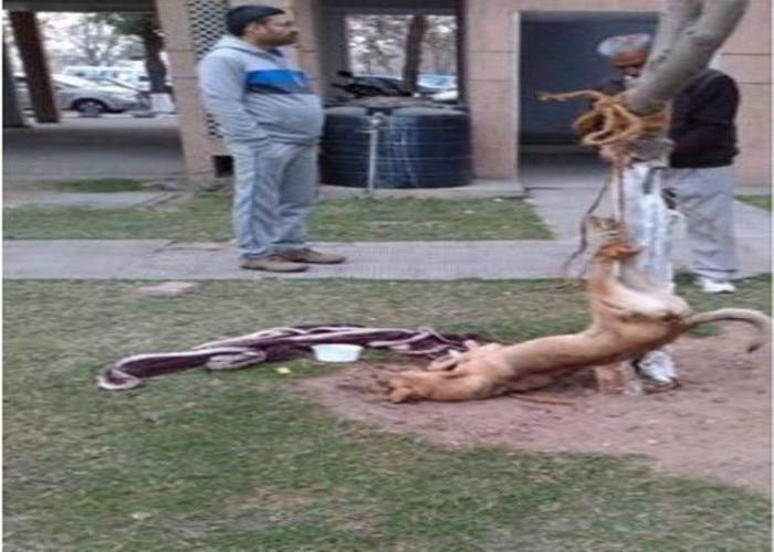 Chandigarh men torture dog