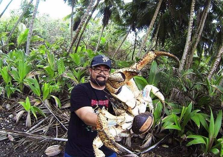 stunning holiday snap shows fearless tourist holding a monstrous crustacean