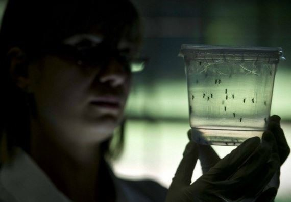 zika virus aware story