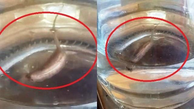 Man films bizarre looking swimming worm