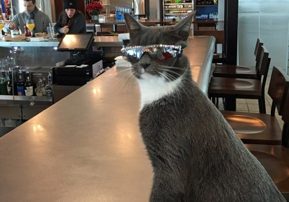 Cat becomes social media star because she has to wear sunglasses