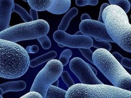 बैक्टीरिया को ड्रग प्रतिरोधी बनाने वाले 76 जीनों की पहचान हुई