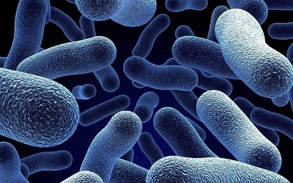 Bacteria Have Ability to 'See,' Eye-Opening Study Finds