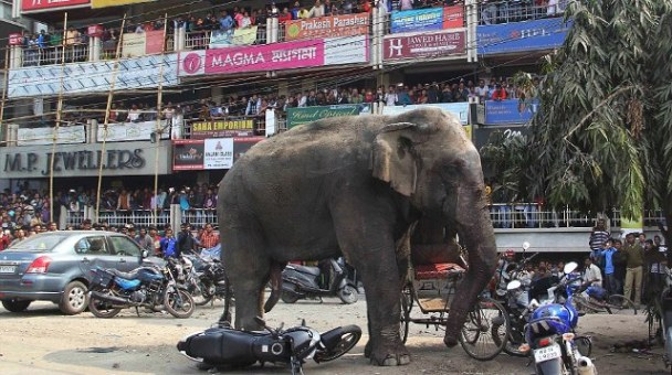 Elephant rampages through West Bengal