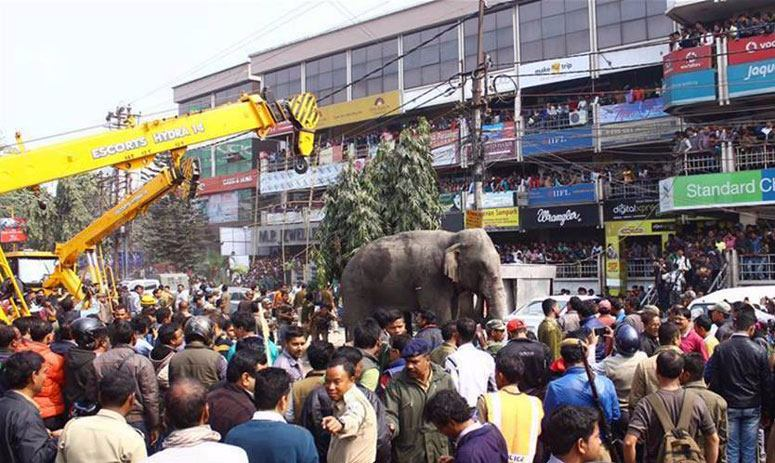 A wild elephant wanders on streets of ‪#‎India‬'s Siliguri