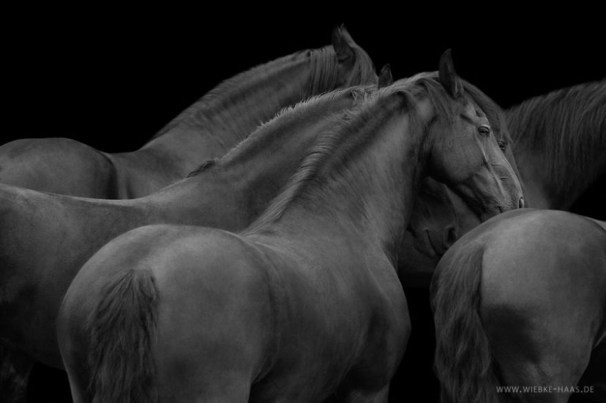 Instead Of Getting A Boring Office Job, I Followed My Dream To Become A Horse Photographer