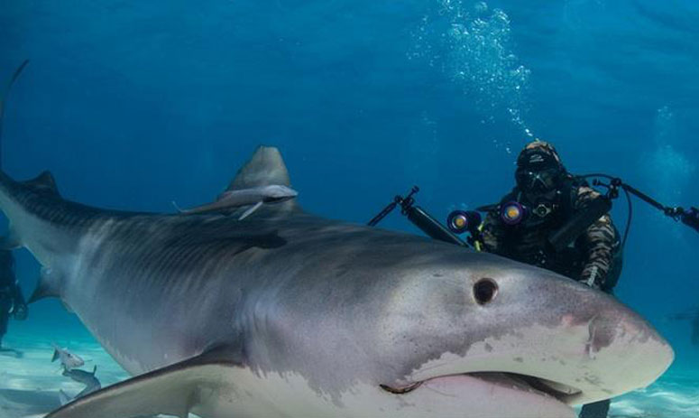 this is how the shark is fed