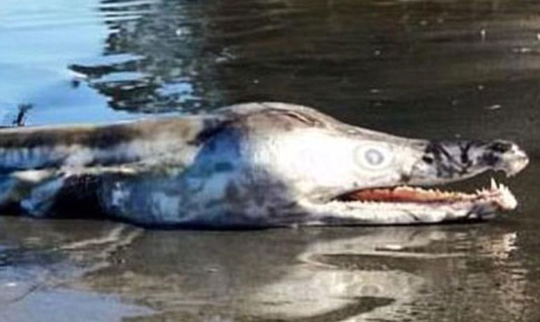 claims of pre historic age creature being found on sea shore of australia
