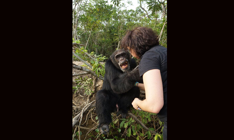 The loneliest chimp in the world just got the best surprise