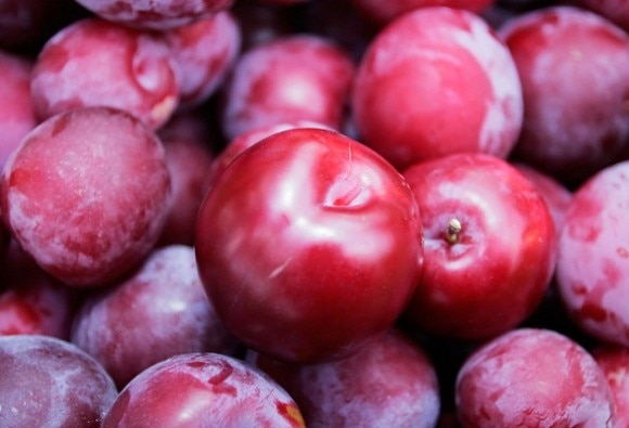 Study shows dried plums provide protection from bone loss due to radiation