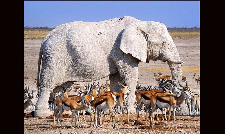 these albino animals are not a pigment of your imagination but reality