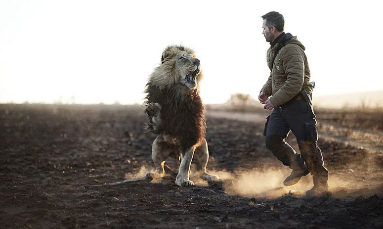 Incredible pictures show the bond between a man and his pride of big cats
