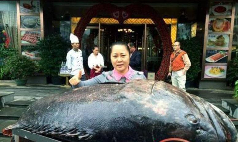 Gigantic Grouper weighed 175kg captured in China