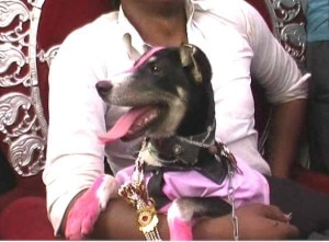 KAUSHAMBI DOG WEDDING 5