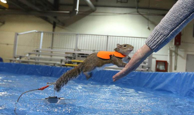 Toronto: Water skiing squirrel Twiggy makes waves