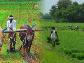 खरीफ फसलों के उत्पादन में आ सकती है कमी, कम बारिश से बुवाई अब तक कम