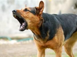 पाकिस्तान: बच्चे को काटने वाले कुत्ते को सुनाई गई मौत की सजा