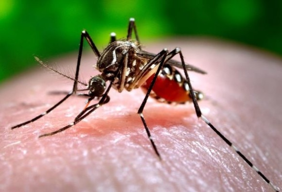20 fresh cases of dengue in Chandigarh count up to 258