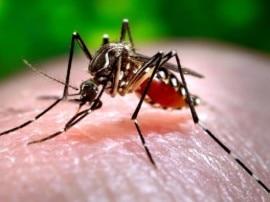 दिल्ली में डेंगू से दो और मौत, कुल मामले बढ़कर 5,220 तक पहुंचे