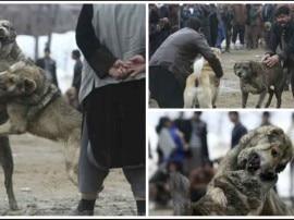 वहशीपन का वो खेल जिसमें कुत्तों को जान गंवाने तक इंसानों का मनोरंजन करना पड़ता है!