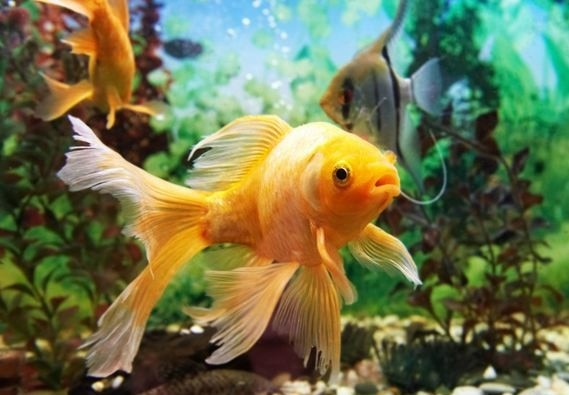 FISH EYES could help find the cure for blindness