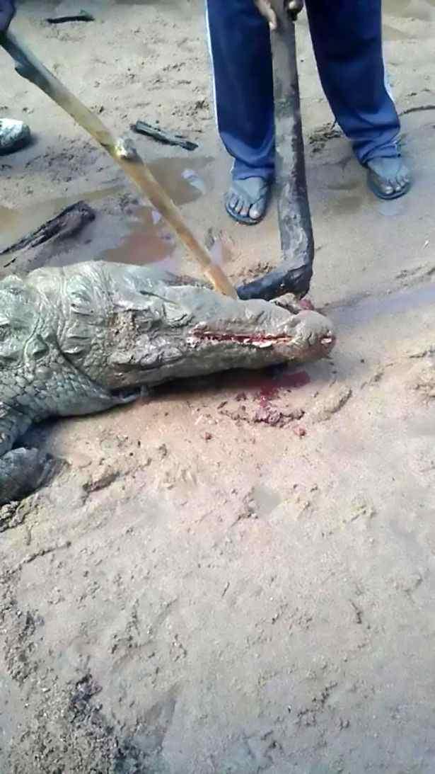 Crocodile (2)-compressed