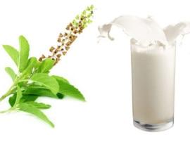 दूध में तुलसी डालने से सेहत को हो सकते हैं ये फायदे
