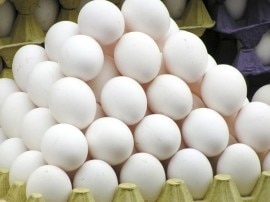 अंडा खाने वाले सावधान, अंडों में पाए गए हैं कीटनाशक!