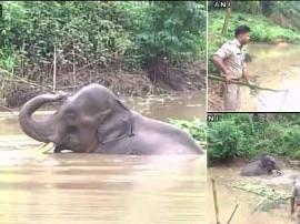 गुवाहाटी: पिछले पांच दिनों से पानी से निकलने के लिए तड़प रहा है ये हाथी