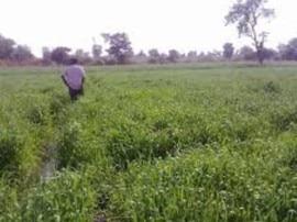 महाराष्ट्र: किसान ने बेटों के नाम की दो करोड़ की जमीन, अब 'नाकारे' बेटों के खिलाफ पहुंचे कोर्ट
