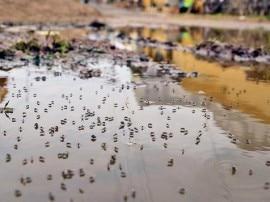 OMG! पुणे के हॉस्पिटल्स में ही मिले डेंगू मच्छर, नोटिस हुआ जारी
