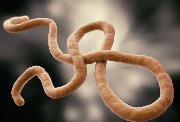 Ebola can persist in survivors semen 2 years after infection